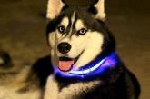 קולר לד לכלב  – רצועה לכלב